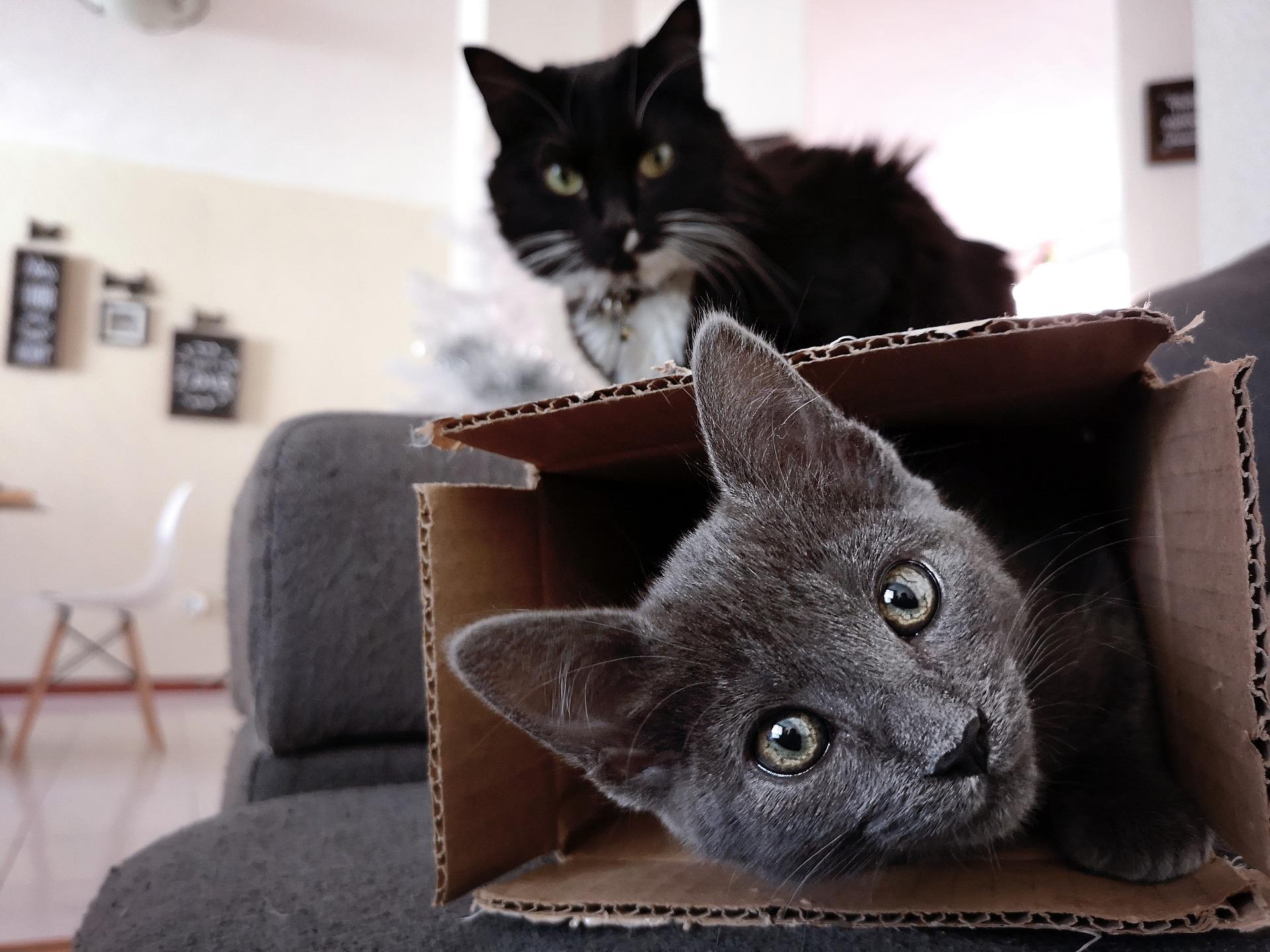 cats-3971069_1920